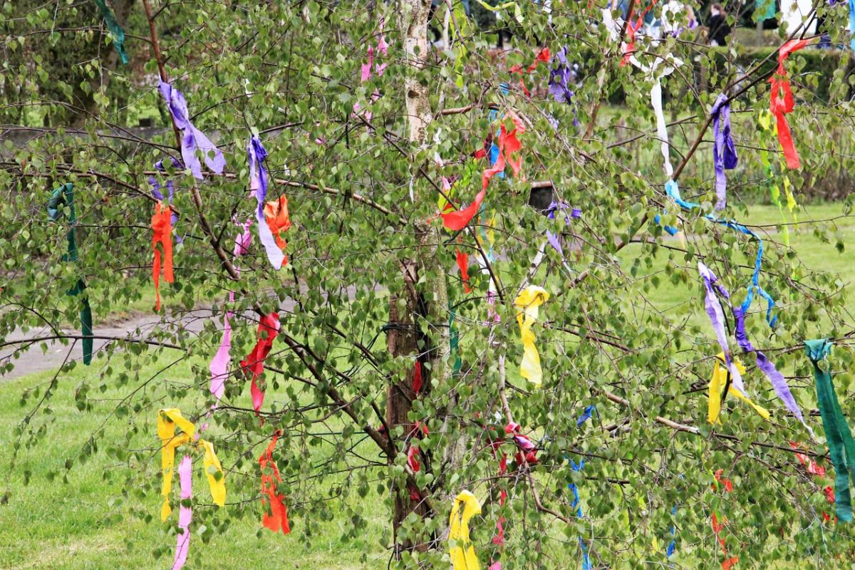 Celebrate May Day with Birch Tree Decoration